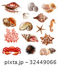 Seashell Realistic Set 32449066