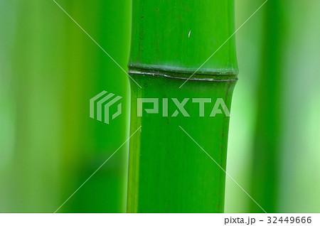 緑の竹林 32449666