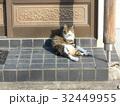玄関先でくつろぐ猫 32449955