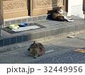 玄関先でくつろぐ猫 32449956