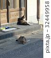 玄関先でくつろぐ猫 32449958