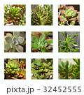 多肉植物 32452555