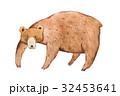 くま クマ 熊のイラスト 32453641