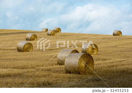 麦ロールが広がる麦畑 32455253