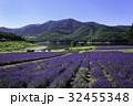 北海道 ラベンダー ラベンダー畑の写真 32455348