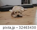 犬 子犬 小犬 仔犬 こいぬ 戌年 dog 子供 2018 年賀素材 正月素材 32463430