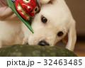 犬 子犬 小犬 仔犬 こいぬ 戌年 dog 子供 2018 年賀素材 正月素材 32463485