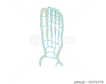 足の構造 32472779
