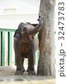 象 王子動物園 動物園の写真 32473783