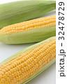 トウモロコシ 32478729