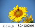 ひまわりとミツバチ 32480209