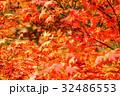紅葉 もみじ 葉の写真 32486553