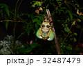 せみ セミ 蝉の写真 32487479