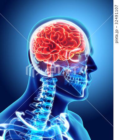 Human Internal Organic - Brain. 32491107