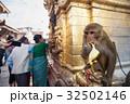 カトマンズ さる サルの写真 32502146