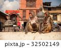 動物 さる サルの写真 32502149