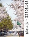 ソウル 花 さくらの写真 32503148