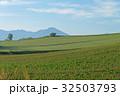 美瑛 畑 風景の写真 32503793