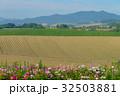 畑 美瑛 北海道の写真 32503881