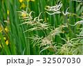 アスチルベ 升麻 泡盛草の写真 32507030