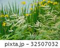 アスチルベ 升麻 泡盛草の写真 32507032