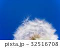 タンポポ 綿毛 クローズアップの写真 32516708