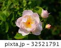 ばら バラ 薔薇の写真 32521791