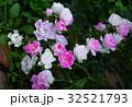 ばら バラ 薔薇の写真 32521793