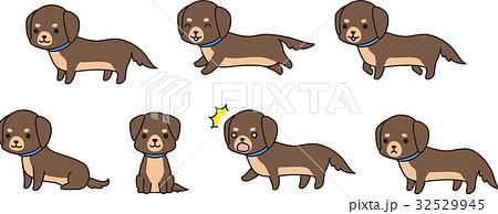 茶色い小型犬(ミニチュアダックスフンド)のポーズ集 32529945