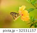 アウトドア マリポサ 自然の写真 32531157