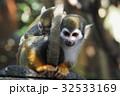 リスザル 猿 哺乳類の写真 32533169
