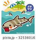 鮫 ドチザメ 海のイラスト 32536016