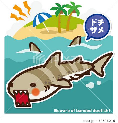 サメのいる海 ドチザメ 32536016