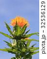 ベニバナ 紅花 空の写真 32536129