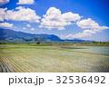 台灣 台東 池上 稻田 以及清澈的藍天白雲  32536492