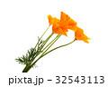 花 フローラル フラワーの写真 32543113