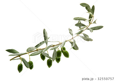Green olives with leavesの写真素材 [32550757] - PIXTA
