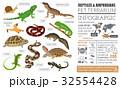Pet reptiles and amphibians icon set flat style  32554428
