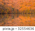 蔦沼 紅葉 木の写真 32554636