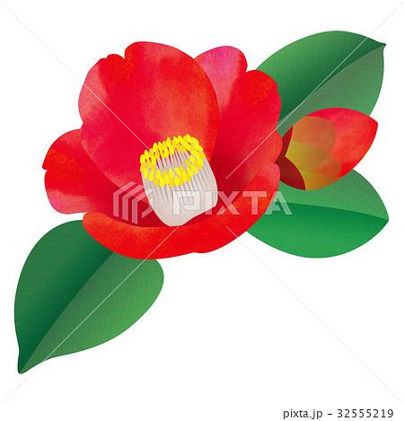 椿の花とつぼみのイラスト素材 32555219 Pixta