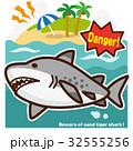 サメのいる海 シロワニ 32555256