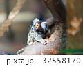マーモセット 小猿 さるの写真 32558170