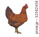 メンドリ 鶏 ビンテージのイラスト 32562456