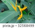 南国の植物 32568499