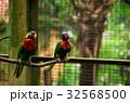 二羽の鳥 32568500