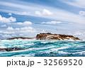 海岸 コロニー 群生の写真 32569520