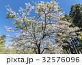 桜 さくら サクラの写真 32576096