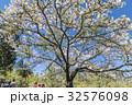 桜 さくら サクラの写真 32576098