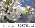 桜 さくら サクラの写真 32576118