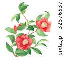 ツバキ 花 水彩のイラスト 32576537